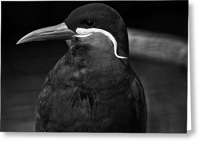 Tern Greeting Cards - Profile in Black Greeting Card by Mountain Dreams