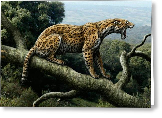 Miocene Greeting Cards - Promegantereon Sabretooth Cat Greeting Card by Mauricio Anton