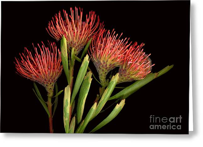 protea Greeting Card by Jacqui Martin