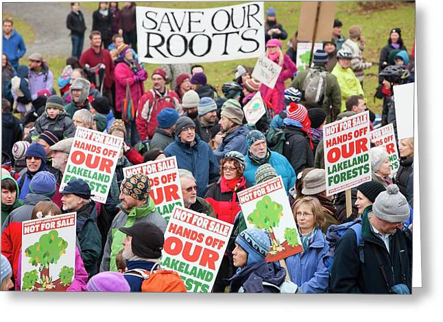 Protest Against Public Forest Selloff Greeting Card by Ashley Cooper