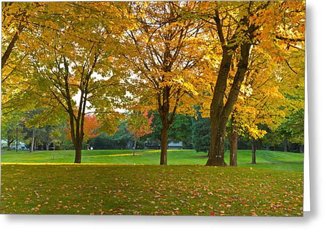 Fallen Leaf Greeting Cards - Public Park In Autumn Colors, Gresham Greeting Card by Panoramic Images