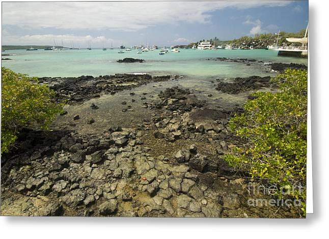 Boats In Water Greeting Cards - Puerto Ayora Greeting Card by William H. Mullins