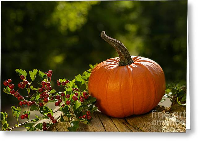 Green Lantern Photographs Greeting Cards - Pumpkin Greeting Card by Amanda And Christopher Elwell