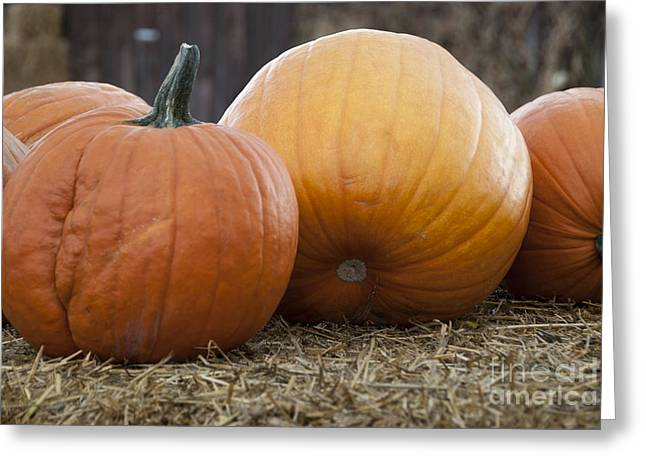 Autumn Colors Greeting Cards - Pumpkins Greeting Card by Juli Scalzi