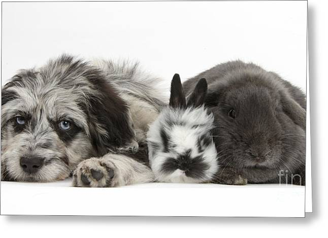White. Rabbit Greeting Cards - Puppy And Rabbits Greeting Card by Mark Taylor