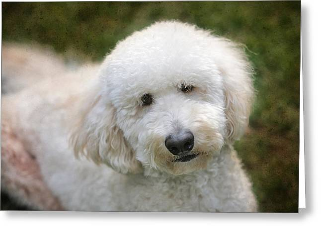 Puppy Portrait Greeting Card by Larry Marshall