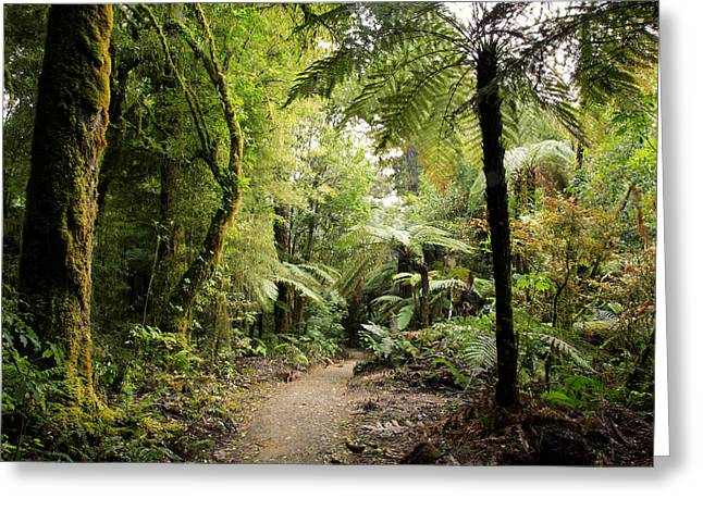 Green Day Greeting Cards - Pureora Forest Greeting Card by Les Cunliffe