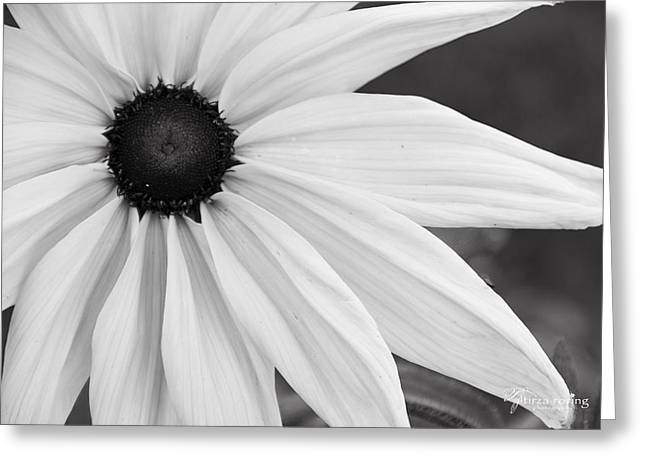 Virtuous Greeting Cards - Purity Coneflower Greeting Card by Tirza Roring