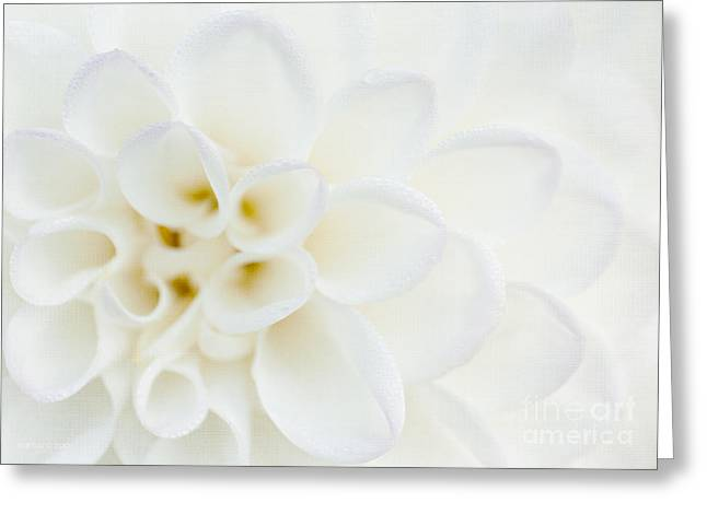 Macro Mixed Media Greeting Cards - Purity Greeting Card by Reflective Moment Photography And Digital Art Images
