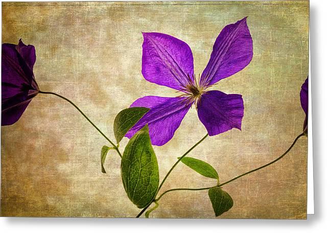 Vine Leaves Greeting Cards - Purple Flower Greeting Card by Al  Mueller