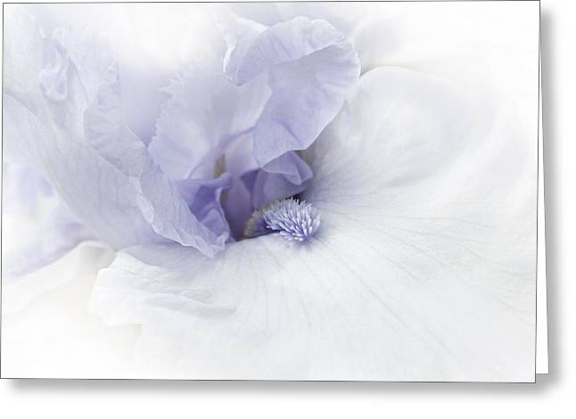 Bearded Irises Greeting Cards - Purple Iris Flower  Greeting Card by Jennie Marie Schell