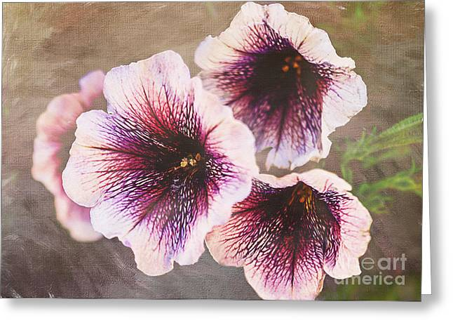 Multiflora Greeting Cards - Purple Petunias Greeting Card by Janice Rae Pariza