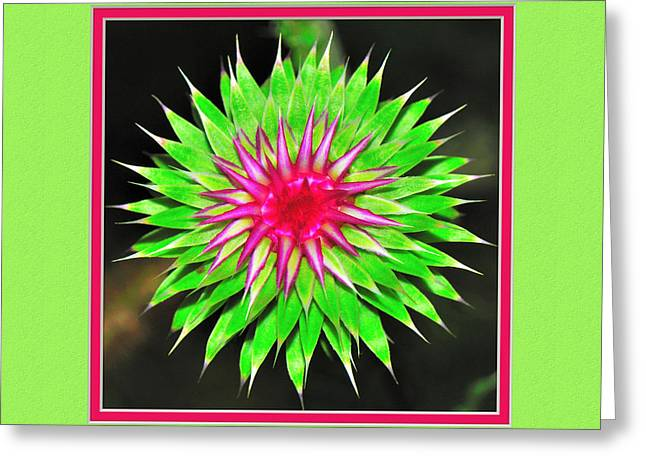 Matting Greeting Cards - Purple Thistle Flower Greeting Card by Charles Feagans