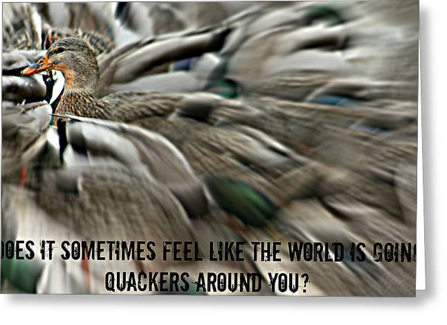 Flocks Of Ducks Greeting Cards - Quackers Greeting Card by Amanda Stadther