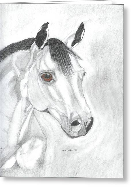 Quarter Horses Drawings Greeting Cards - Quarter Horse  Greeting Card by Don  Gallacher