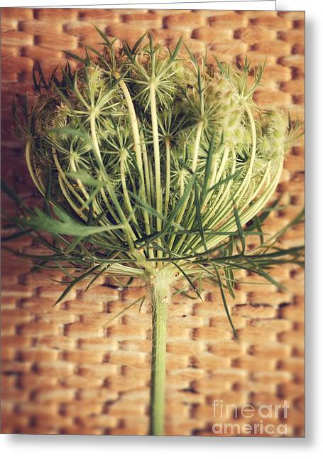 Green Bamboo Greeting Cards - Queen Annes Lace Greeting Card by HD Connelly