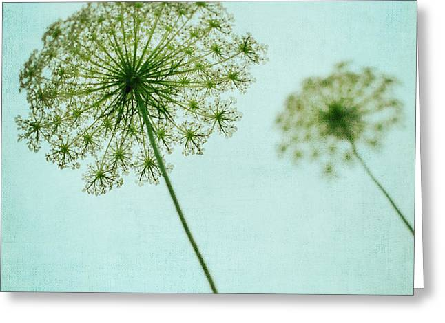 Queen Annes Lace Greeting Cards - Queen Annes Lace Greeting Card by Kim Fearheiley