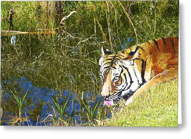 Wildcats Paintings Greeting Cards - Quench Greeting Card by Judy Kay