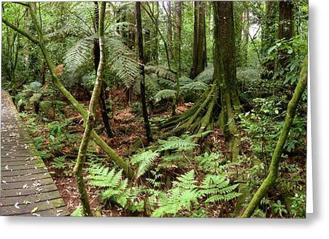 Rain forest Greeting Card by Les Cunliffe