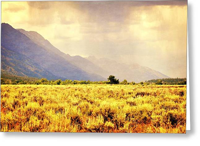 Marty Koch Greeting Cards - Rain on the Sagebrush Greeting Card by Marty Koch