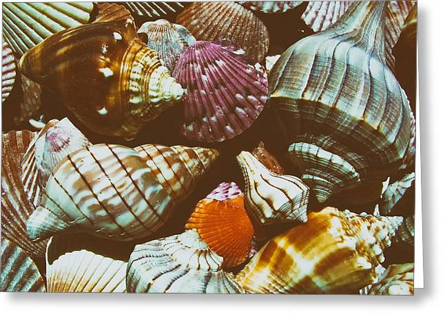 Sea Creature Photos Greeting Cards - Rainbow Colors of the Sea Greeting Card by Derya Peker