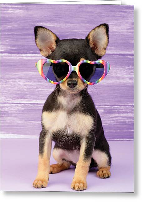 Puppies Photographs Greeting Cards - Rainbow Sunglasses Greeting Card by Greg Cuddiford