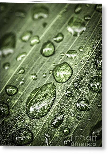 Wet Greeting Cards - Raindrops on green leaf Greeting Card by Elena Elisseeva