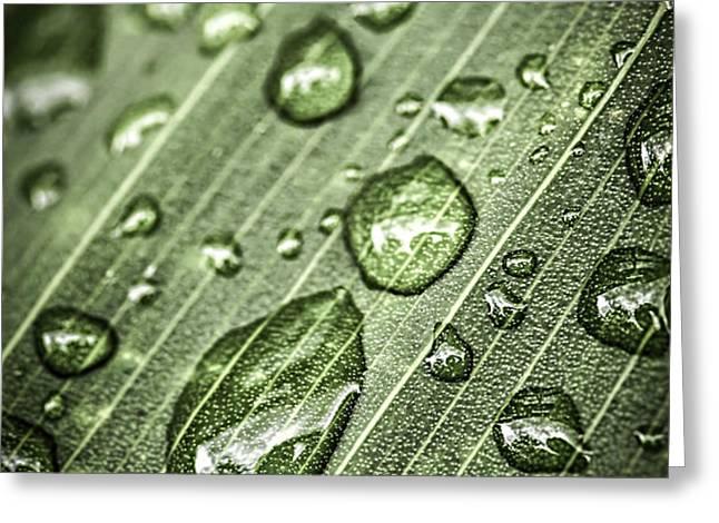 Raindrops on green leaf Greeting Card by Elena Elisseeva
