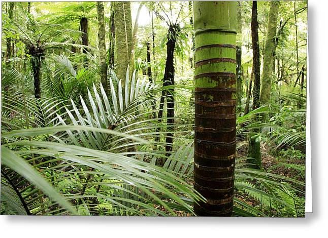 Botany Greeting Cards - Rainforest  Greeting Card by Les Cunliffe