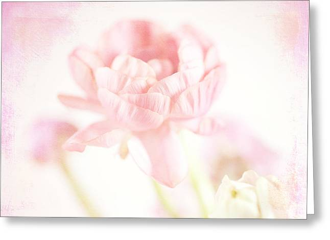 Textured Floral Greeting Cards - Ranunculus Greeting Card by June Marie Sobrito