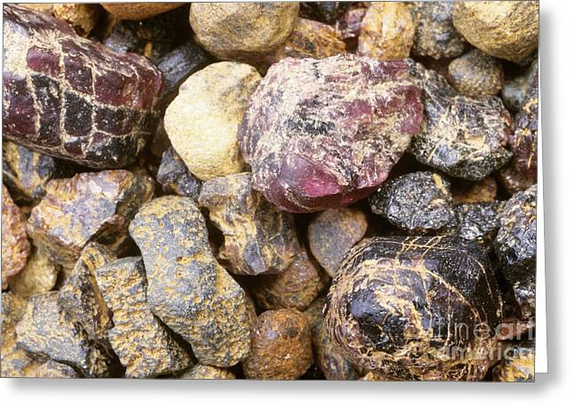 Garnet Greeting Cards - Raw Garnets Greeting Card by William H. Mullins