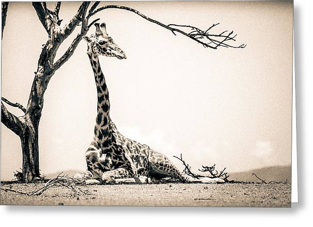 Overalls Greeting Cards - Reclining Giraffe Sepia Greeting Card by Mike Gaudaur