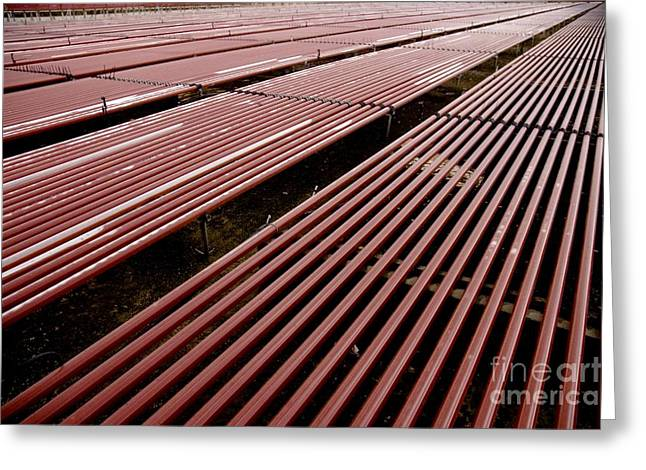 21st Greeting Cards - Red Algae Farming Greeting Card by PhotoStock-Israel