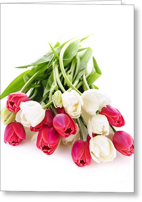 Floral Arrangement Greeting Cards - Red and white tulips Greeting Card by Elena Elisseeva