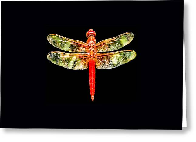 Tony Grider Greeting Cards - Red Dragonfly Small Greeting Card by Tony Grider