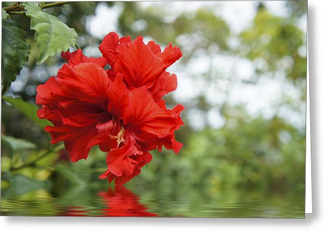 Tropical Leaves Greeting Cards - Red Flowers Greeting Card by Aged Pixel