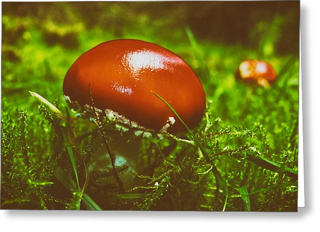 Forest Floor Greeting Cards - Red Fly Agaric Mushroom Greeting Card by Mountain Dreams