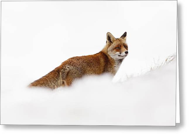 Vulpes Greeting Cards - Red Fox in a White World Greeting Card by Roeselien Raimond