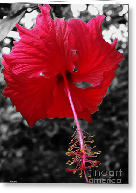 Stamen Digital Greeting Cards - Red Hibiscus Greeting Card by Cheryl Young
