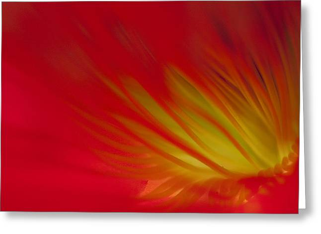 Lily Greeting Cards - Red Greeting Card by Lily