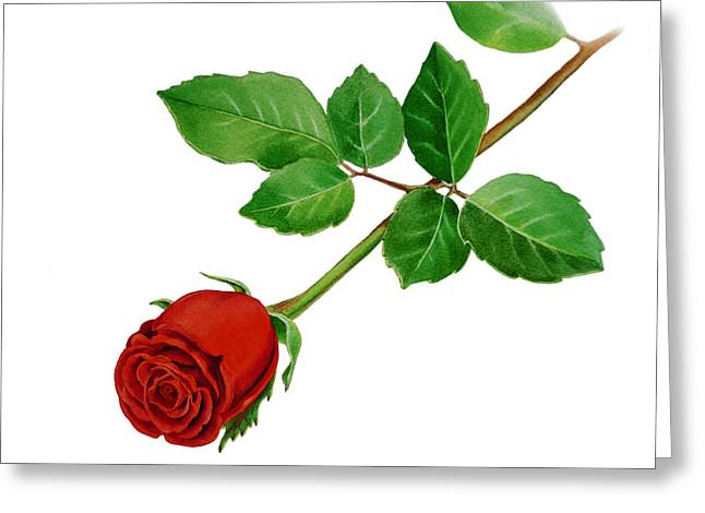 Home Decoration Paintings Greeting Cards - Red Rose Greeting Card by Irina Sztukowski