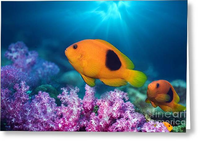 Saddleback Greeting Cards - Red Saddleback Anemonefish And Soft Greeting Card by Georgette Douwma