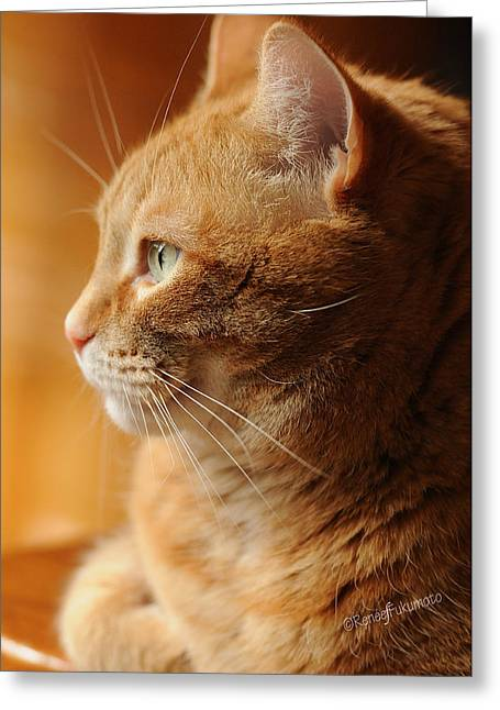 Feline Photography Greeting Cards - Red Tabby Cat Greeting Card by Renee Forth-Fukumoto