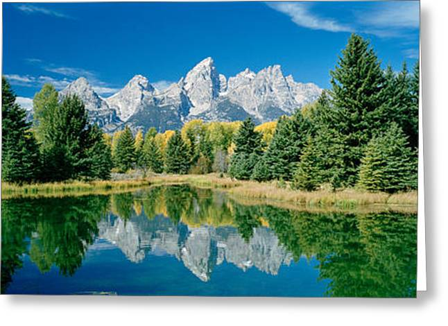 Pinus Greeting Cards - Reflection Of Trees In Water Greeting Card by Panoramic Images
