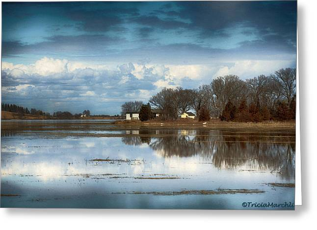 Shack Greeting Cards - Reflections Greeting Card by Tricia Marchlik