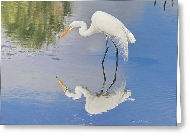Florida Pond Greeting Cards - Reflective Pose Greeting Card by Deborah Benoit