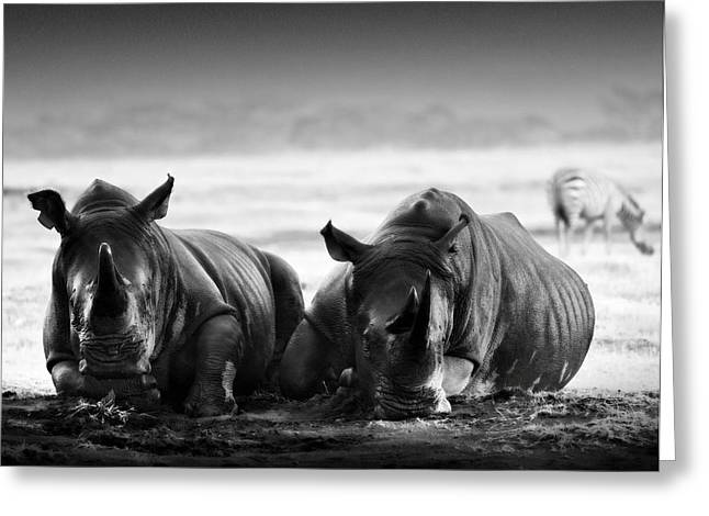 Resting In The Rain Greeting Card by Mike Gaudaur
