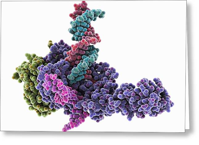 Retroviral intasome molecule Greeting Card by Science Photo Library