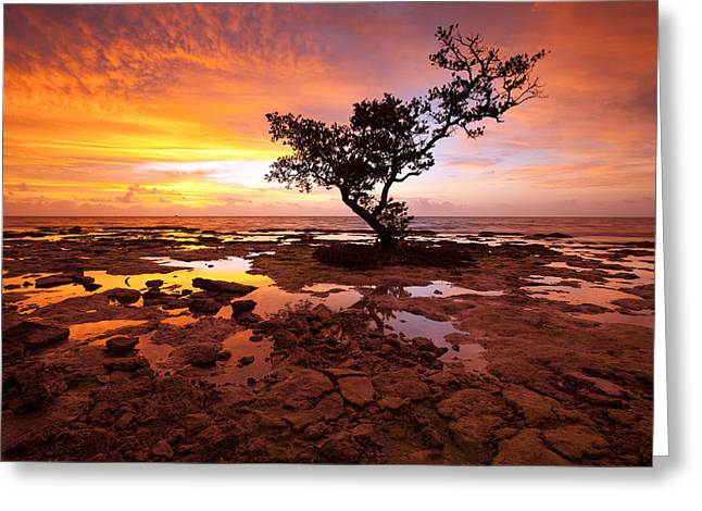 Mangrove Trees Greeting Cards - Reverence  Greeting Card by Patrick Downey