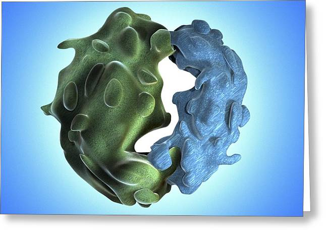 Biochemistry Greeting Cards - Ribosome, artwork Greeting Card by Science Photo Library